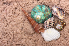 Sea shells on sand. Summer beach background. Top Stock Photo