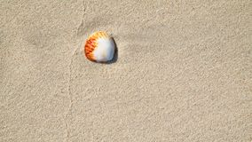 Sea shells on sand. Summer beach background. Top view.  stock images