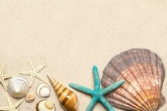 Sea shells on sand. Summer beach background. Top view Royalty Free Stock Photography