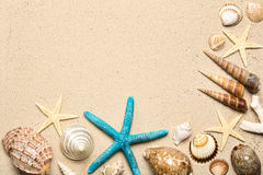Sea shells on sand. Summer beach background. Top view Stock Photos
