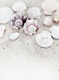 Sea Shells on Sand Vertical Border Royalty Free Stock Images