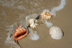 Sea Shells on Sand and Water Royalty Free Stock Images
