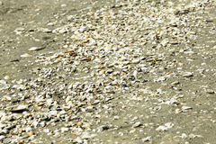 Sea shells on sand Royalty Free Stock Images