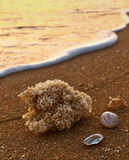 Sea shells on sandy beach Stock Image