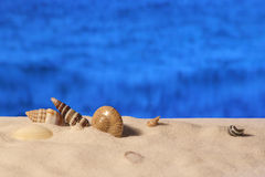 Sea shells on the sandy beach Stock Photography