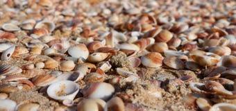 Sea shells on the sandy beach Stock Photos