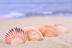 Sea shells on the sandy beach and blue sea background Royalty Free Stock Photography