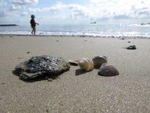Sea shells on sandy beach Royalty Free Stock Photography