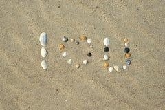 Sea shells on sandy beach. Summer sand background Royalty Free Stock Image