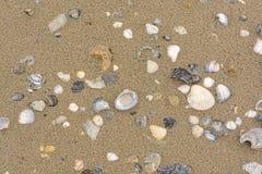 Sea Shells on a Sandy Beach Royalty Free Stock Image