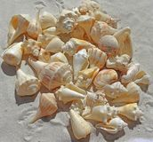 Sea Shells, Sea Beach, Sand, Nature Stock Images