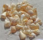 Sea Shells, Sea Beach, Sand, Nature Stock Images