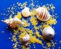 Sea shells and sea salt on velvet Stock Image