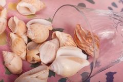 Sea shells. On a colorful background stock photos