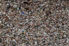Sea Shells on the Sea Shore. This is a close up image of sea-shells and fragments of shells of various colours. Taken on the West coast of Scotland in the month Stock Images