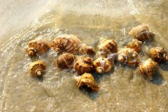 Sea shells in the sea water Stock Photos
