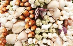 Sea Shells Seashells Stock Photography