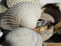 Sea shells. Seashells on the north sea beach Royalty Free Stock Photo