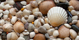 Sea Shells Seashells! - scallop and assorted shell Stock Image
