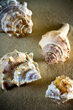 Sea Shells Seashells, sea shells from beach - panoramic - with l Stock Image