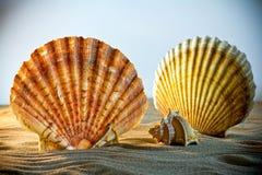 Sea Shells Seashells, sea shells from beach - panoramic - with l Stock Photography