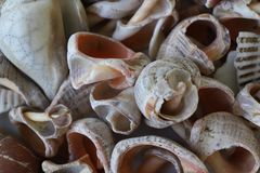 Sea shells on the seashore collected by vacationers. Seashells are different, many are damaged by the surf, some are large and multicolored. when the shells Stock Images
