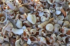 Sea shells on the seashore collected by vacationers. Seashells are different, many are damaged by the surf, some are large and multicolored. when the shells Royalty Free Stock Photos