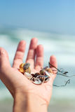 Sea shells and seaweed in a female hand near the sea for background. Royalty Free Stock Photos