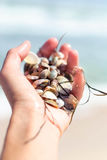 Sea shells and seaweed in a female hand near the sea for background. Stock Photography