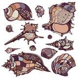Sea shells set. Stock Photo