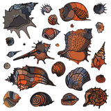 Sea shells set. Royalty Free Stock Photography