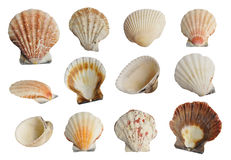 Sea shells set Royalty Free Stock Photography