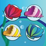 Sea shells - Set of four elements Stock Photography