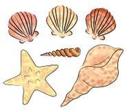 Sea shells set Royalty Free Stock Photos