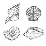 Sea shells set Royalty Free Stock Image