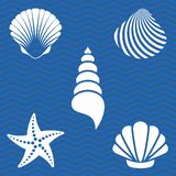 Sea shells royalty free illustration