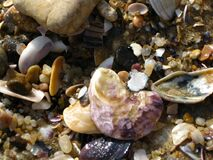 sea-shells-on-shore Royalty Free Stock Images