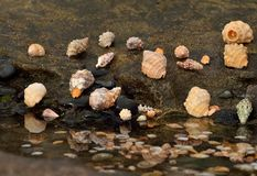 Sea shells. In the shore of the  beach Royalty Free Stock Photography
