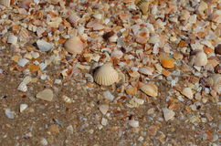 Sea shells on the shore close-up photo Royalty Free Stock Photo