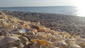 Sea shells on the shore Royalty Free Stock Photo