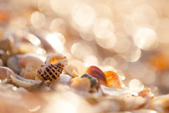 Sea shells on the shore Stock Images
