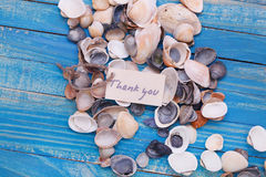 Sea shells with a sign - Thank you Stock Photos