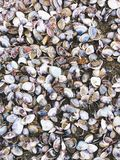Sea shells and snail on the sand beach Royalty Free Stock Image
