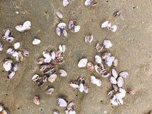 Sea shells and snail on the sand beach Royalty Free Stock Photos