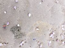 Sea shells and snail on the sand beach Stock Images