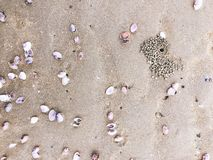 Sea shells and snail on the sand beach Stock Image