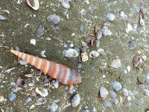 Sea shells and snail on the sand beach Stock Photos