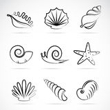 Sea shells and snail Stock Photography