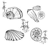 Sea Shells and Snails Stock Photography