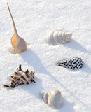 Sea shells on the snow Stock Photos